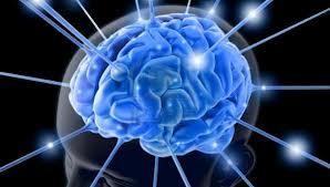 La prima mappa del cervello in 3D!