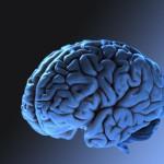 cervello iomemorizzo.it